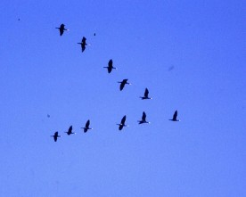 L'avanguardia come il volo delle anatre, di Nadia Cavalera
