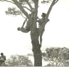 Nadia col fratello Giovanni su un albero incombente su Porto selvaggio